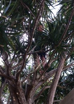 T climbing trees.