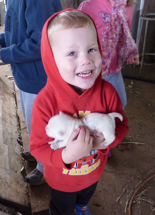T at our farm stay cuddling the new puppies.